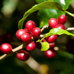 True Organics Cranberry provides the earth-friendly protection from free radical damage you need.†