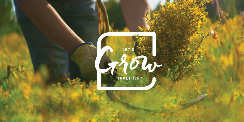 Lets Grow Together